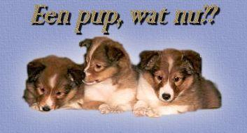 gedrag volwassen hond naar pup